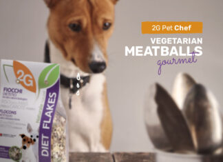 Gourmet vegetarian meatballs for dogs