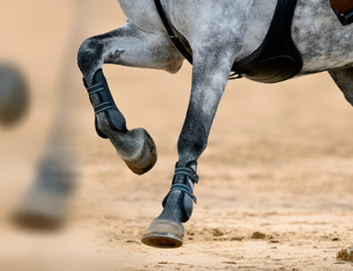 How to protect sport horses joints?