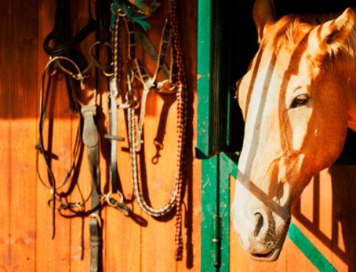 Perché alcuni problemi respiratori dei cavalli peggiorano con il freddo?