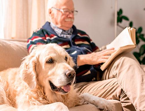 Diabete nei cani: quali sono i segnali?
