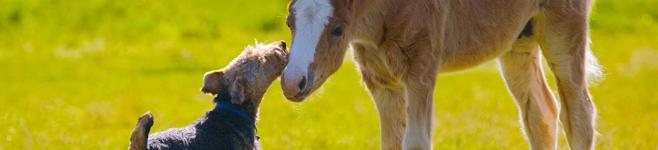 Pferd und Jagd 2018